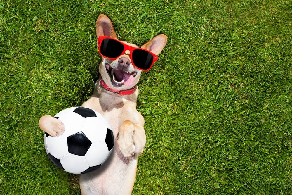 Paws On Pitch